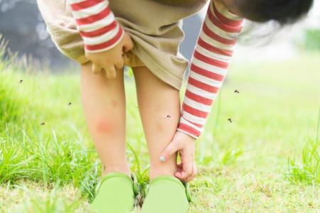 16 روش شگفت انگیز برای دور کردن و کشتن پشه ها