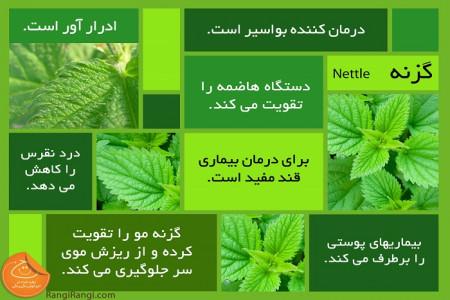 26 خاصیت جادویی گیاه گزنه برای سلامت بدن