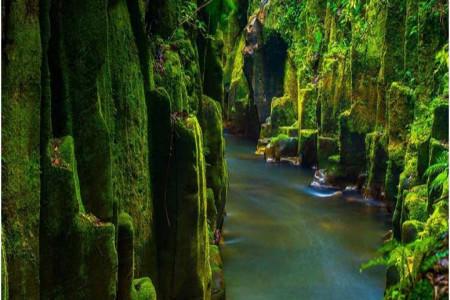هزینه های سفر به نیوزلند و دیدنی های زیبای آن