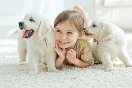 راهنمای خرید حیوان خانگی مناسب