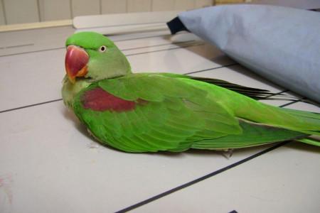 اقدامات لازم از تشخیص تا درمان پرنده بیمار