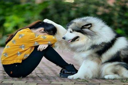آشنایی با وفادارترین نژاد سگ
