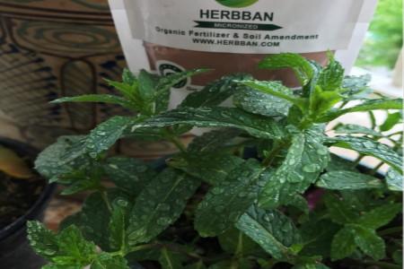 آشنایی با هربان (herbban) کود معدنی و ارگانیک گیاهان
