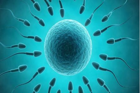تقویت اسپرم در طب سنتی : داروهای گیاهی برای بهبود کیفیت اسپرم