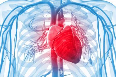 قلب انسان / همه چیز در مورد قلب انسان