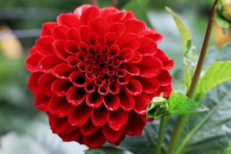 نیازها و شرایط نگهداری از گل کوکب چگونه است ؟