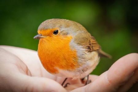 علت ترس از پرنده (فوبیای پرنده) چیست و چگونه درمان میشود ؟