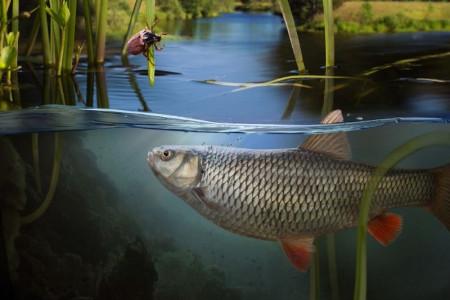 خواب ماهی در آب