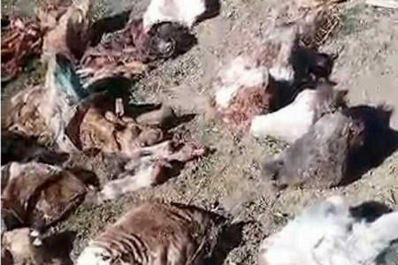 ماجرای الاغ های بدون سر در زنجان چیست ؟