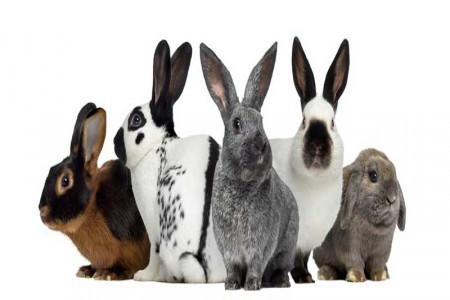 تعبیر خواب خرگوش : 44 نشانه و تعبیر دیدن خرگوش در خواب