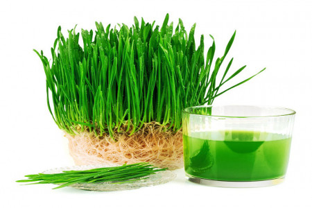 خواص شگفت انگیز دارویی «سبزه عید»