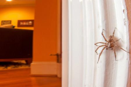نحوه از بین بردن عنکبوت و تار عنکبوت خانگی