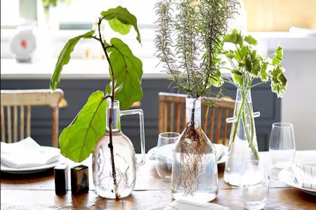 19 گیاهی که بدون خاک و با کمی آب رشد می کنند