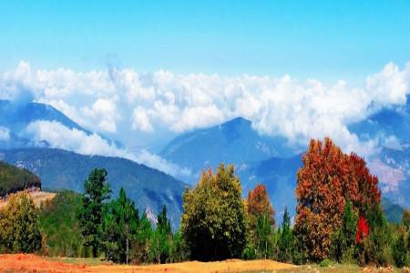 جنگل ابر؛ اقیانوسی رویایی در دل جنگل