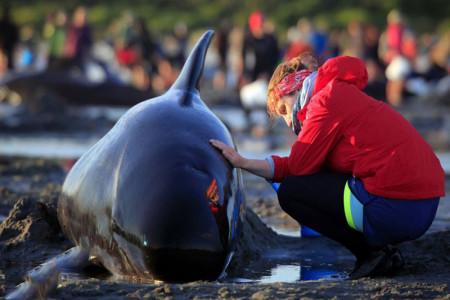 آشنایی کامل با دنیای نهنگ ها : چرا نهنگ ها خودکشی می کنند ؟