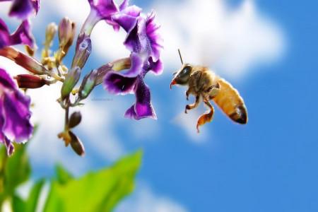شعر یک روز که پیغمبر | شعر زنبور عسل و پیامبر (ص)