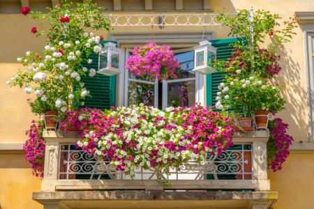 معرفی گل و گیاهان مناسب برای انواع بالکن