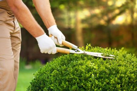 انواع قیچی باغبانی