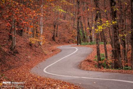جنگل های هیرکانی و تصاویر پاییز هزار رنگ