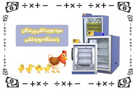 بررسی سود جوجه کشی پرندگان با دستگاه جوجه کشی !