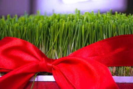 13 تصویر با کیفیت از سبزه هفت سین نوروز