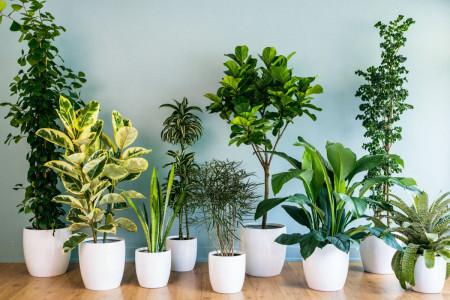 معرفی 10 گیاه تصفیه کننده هوا