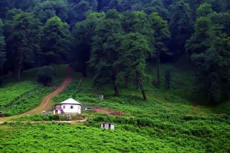 سفری رویایی به جنگل تیلاکنار واقع در مازندران