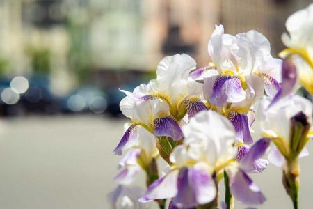 فواید بی نظیر گل زنبق برای زیبایی پوست و سلامت بدن
