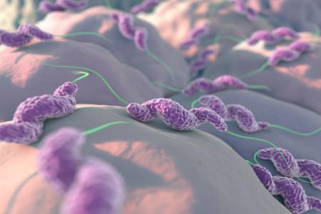 عفونت کامپیلوباکتر و بهترین راه پیشگیری از این عارضه