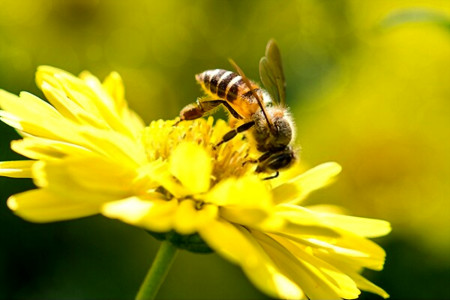 آیا زمان و روش غذا دادن به کلنی زنبور عسل را میدانید؟