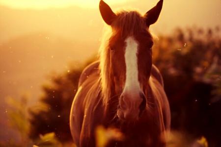 7 بیماری دستگاه تنفسی اسب + راه درمان