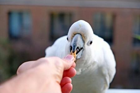 آیا دادن آجیل به پرنده (طوطی) مفید است یا مضر؟