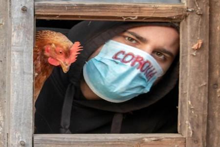 آیا حیوانات و پرندگان خانگی کرونا می گیرند؟