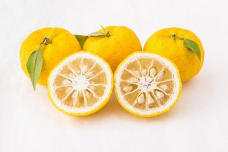 معرفی میوه یوزو و خواص نهفته در این میوه