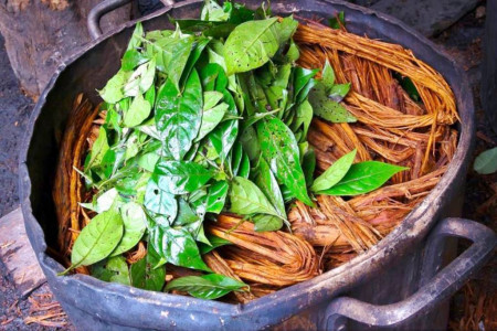 آشنایی با آیاهواسکا (ayahuasca) یکی از روانگردان های سنتی