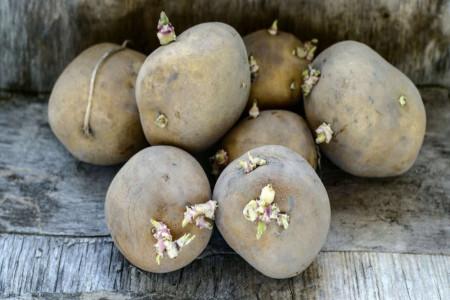 آیا خوردن سیب زمینی جوانه زده برای بدن مضر است ؟