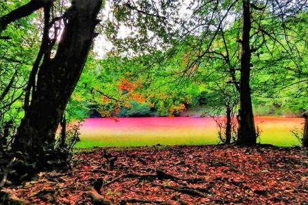 آشنایی کامل با مرداب هسل واقع در جنگل های مازندران