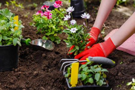تفاوت خاک باغچه و خاک گلدان چیست ؟ هر کدام چه خصوصیاتی دارند ؟
