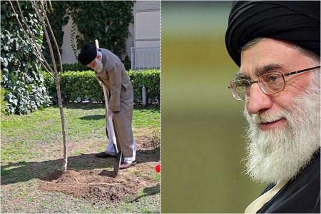درخت کاشتن رهبری
