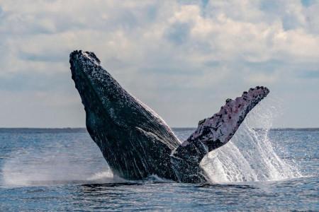 مرگ نهنگ غول پیکر در ساحل لیلیتین بندر دیلم + فیلم