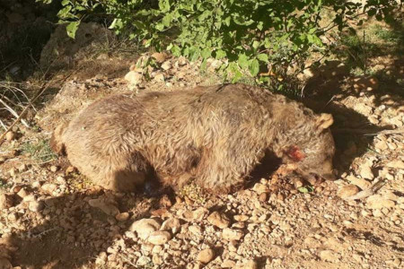 کشتن بی رحمانه یک خرس در حال انقراض در ارومیه + فیلم