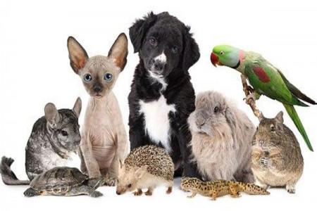 تعبیر خواب حیوانات : 25 نشانه و تعبیر دیدن خواب حیوانات مختلف