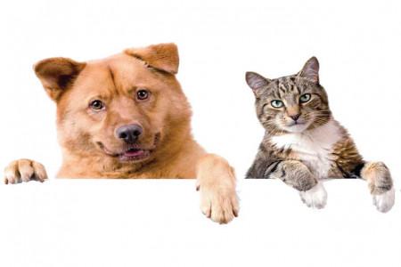 تصاویری از عمل زیبایی سگ ها و گربه ها !