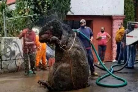 ماجرای کشف موش عظیم الجثهای در فاضلاب مکزیک چه بود ؟