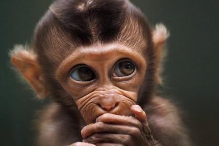 زیباترین عکس های حیوانات در جهان معرفی شدند