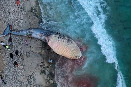 کشف لاشه ی یک نهنگ 5 تنی در جزیره کیش + فیلم