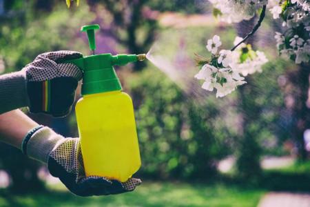 آفت کش ارگانیک برای دفع حشرات از خانه و باغچه + روش تهیه