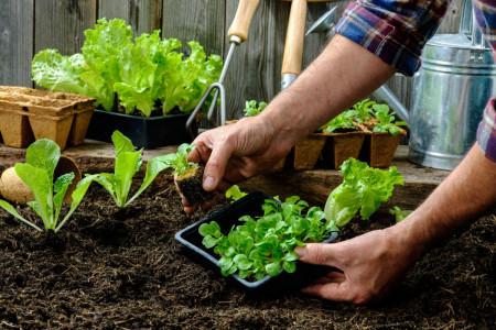 آشنایی با نحوه کاشت و پرورش 7 مدل سبزی خوراکی در گلدان