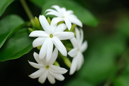 شعر گل یاس   احساسی ترین اشعار و دلنوشته های عاشقانه گل یاس