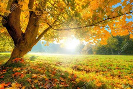 صبح بخیر پاییزی | جدیدترین و زیباترین پیامک صبح بخیر پاییزی